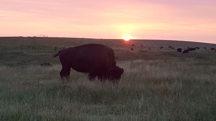 Evening on the Prairie - Tours available upon request and prior arrangements