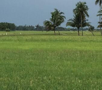 Penang, paddy field, seafood, villa - Seberang perai utara