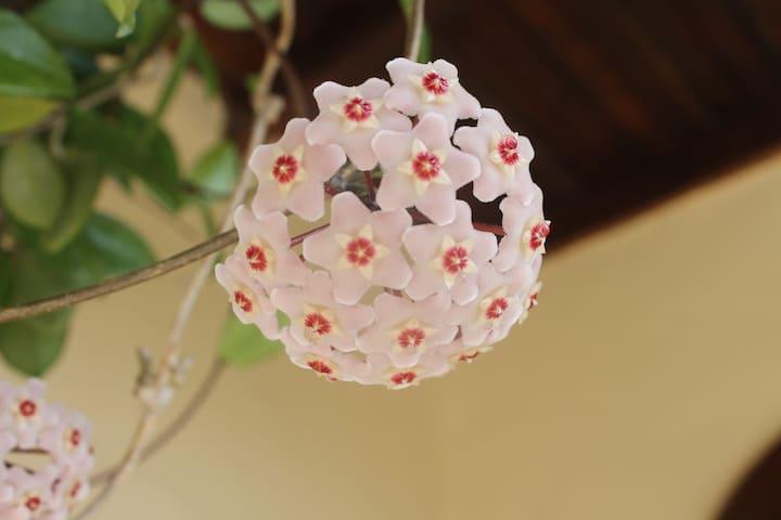 Porcelain flower/Flor de porcelana