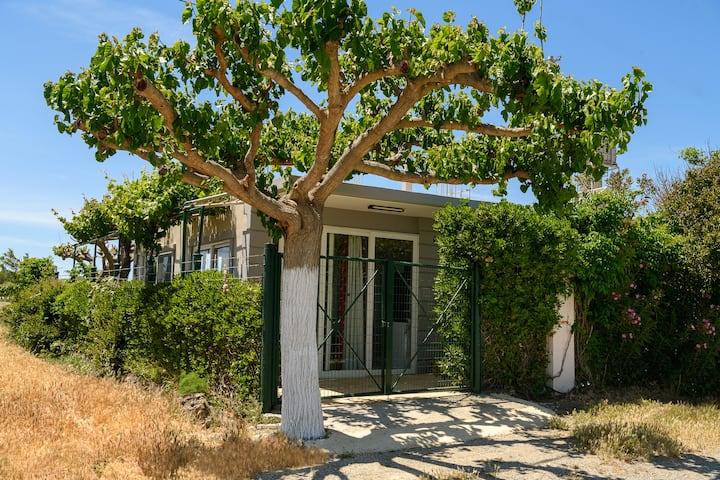 Petrakis Afrathias garden house