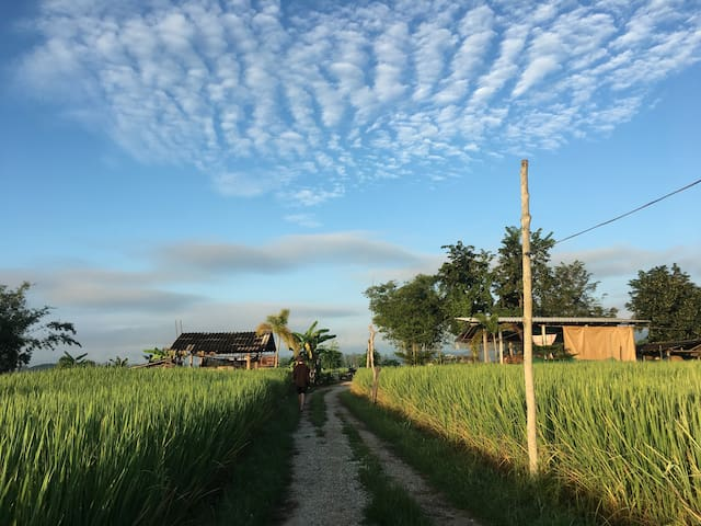Odin Homestay - Life in a Thai Village