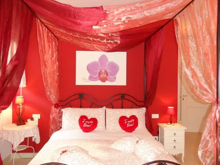 b&b petali rosa: camera Gerbera