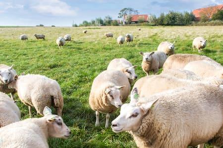 Genieten aan de Oosterschelde in Zeeland - Wemeldinge - Bungalow