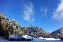 Moos im Winter