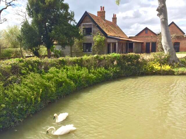 Swans swimming around the moat in front of Swan Cottage
