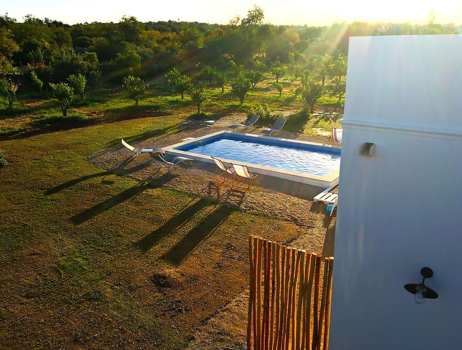 La piscine au milieu des orangers et des oliviers prend le soleil du matin au soir. Une terrasse autour, la cuisine à côté et un BBQ pour profiter du beau temps.