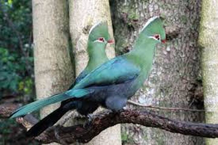 The gorgeous Knysna Loerie and other birds in the garden and surrounds