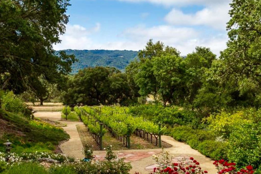 Go for a leisurely saunter among the vines, garden and wooded hillside - the ultimate relaxation technique.  All within a 4 acre exclusive gated estate.