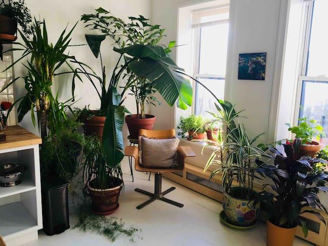 Botanical Bedstuy