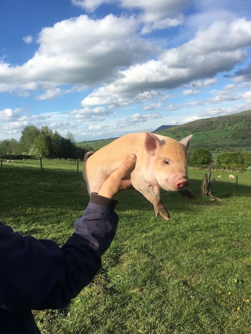The view to sit and stare with one of our micro pigs