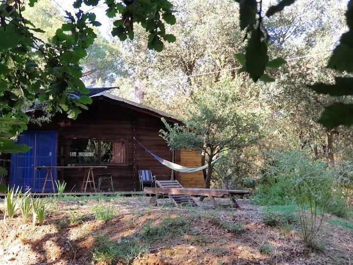 Walden, o la vida al bosc de les Gavarres