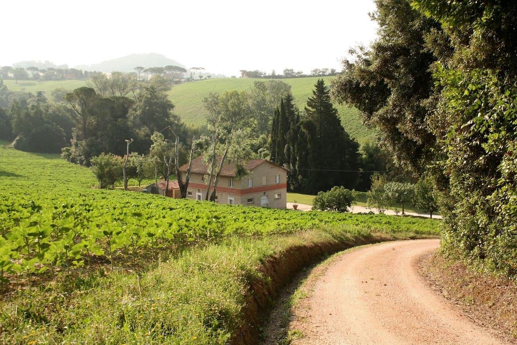 La strada di accesso privato alla casa