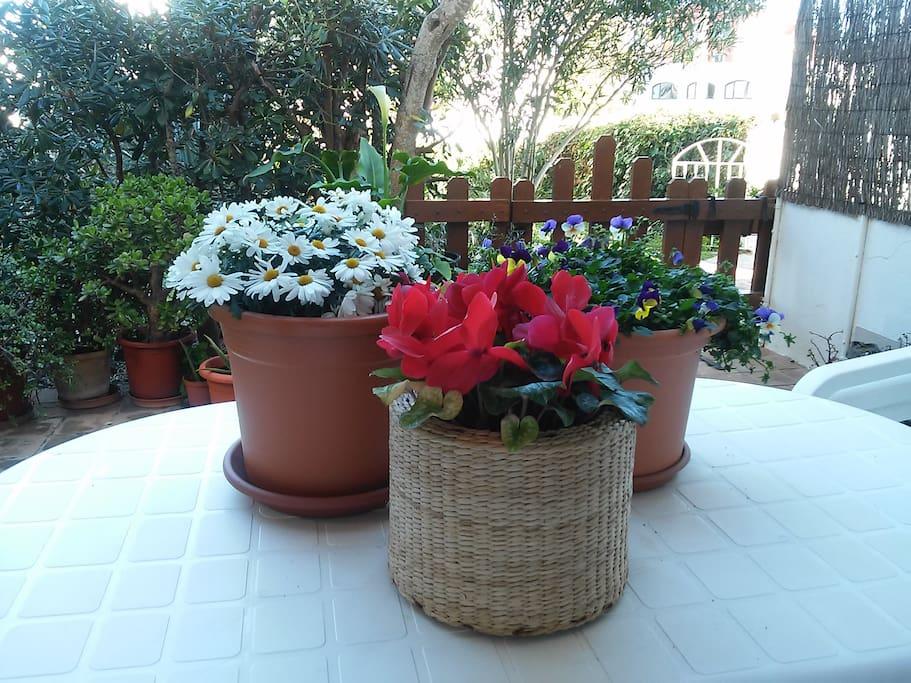 Espero que te gusten las flores!
