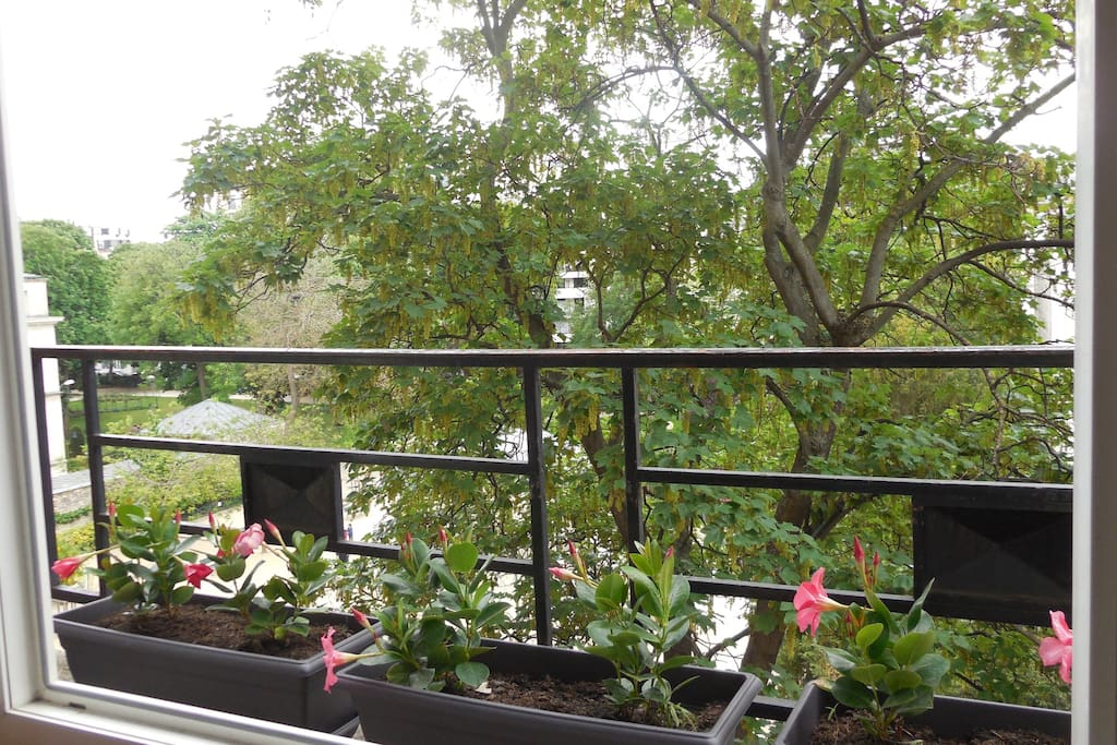 view from living window
