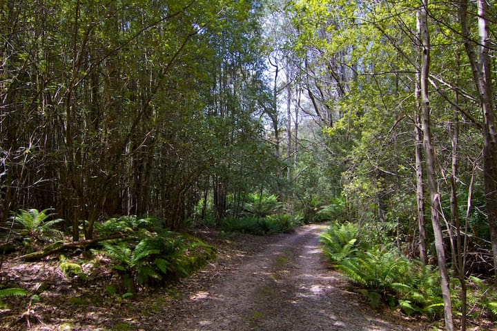 The beautiful tree-lined driveway takes you to a clearing with the cottage.