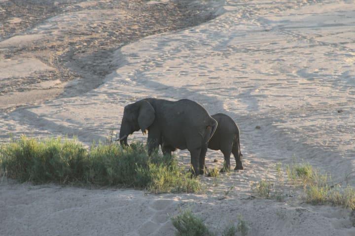 Ngwenya Lodge HIPPO BEND