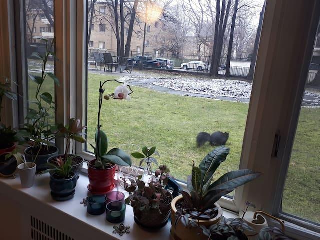 Homey beautiful apartment.