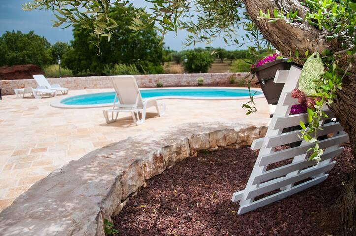 la piscina, gli ulivi e i noci/ the pool, the olive and walnut trees.