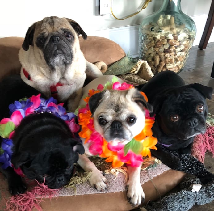 Lucy, Dozer, Ellie and Diesel waiting to greet you.