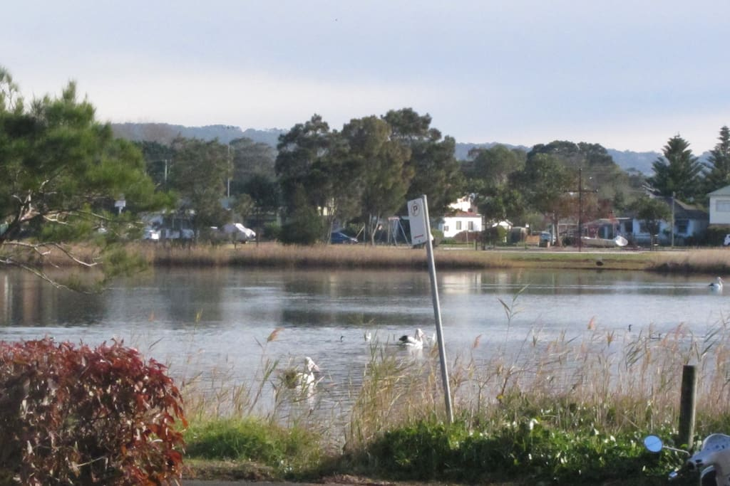 Wake up to Pelicans enjoying a morning swim across the road.