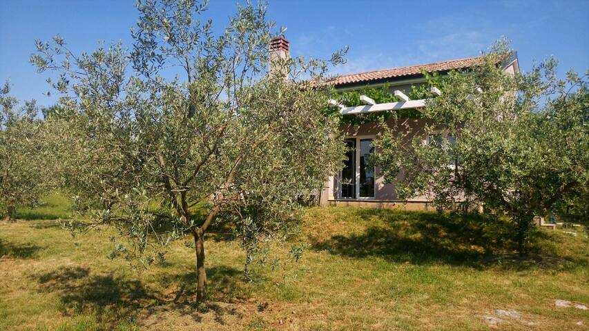 Country house Olivea in Istria