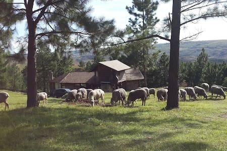 Altos del Durazno / Cabaña la Pirca