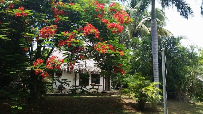 The Little Grass Shack - Utila - Apartment