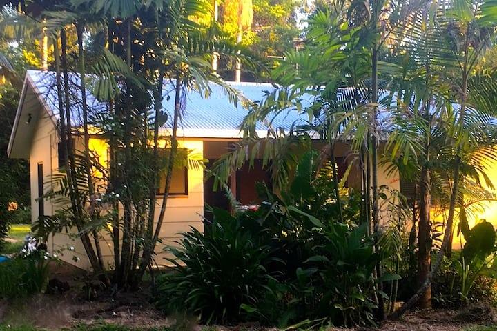 Rain Forest Studio