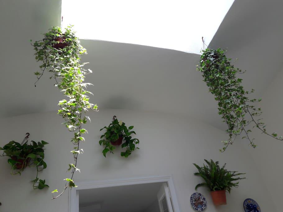Patio de plantas