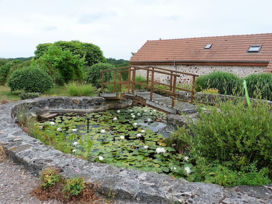 The big lily pond in the communal garden