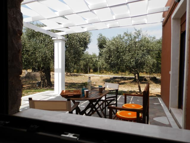 Modern New stone house (1) in olive grove