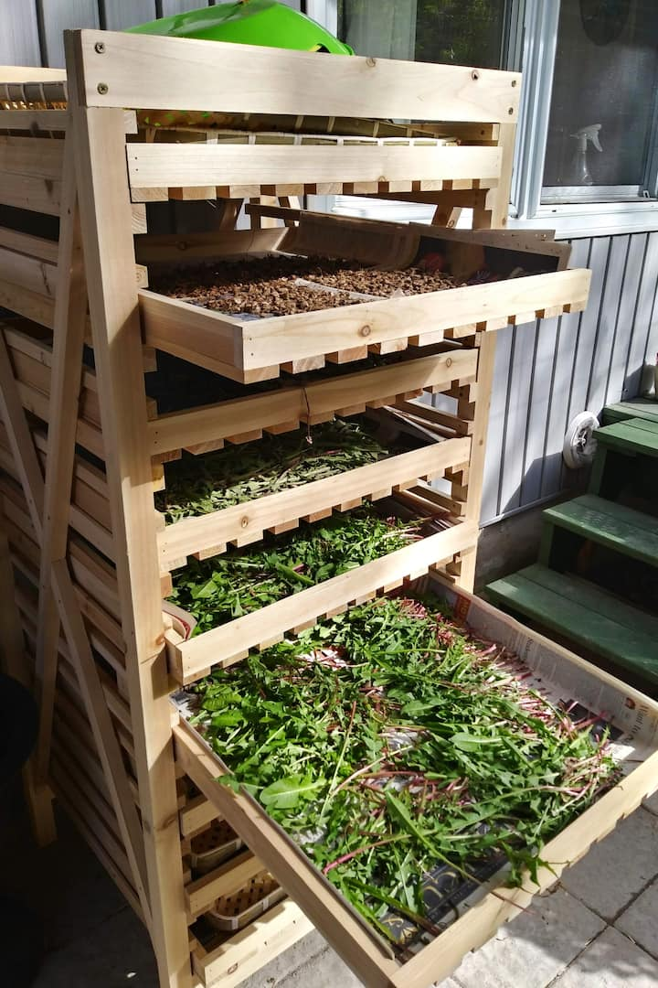 Trays of herbs drying