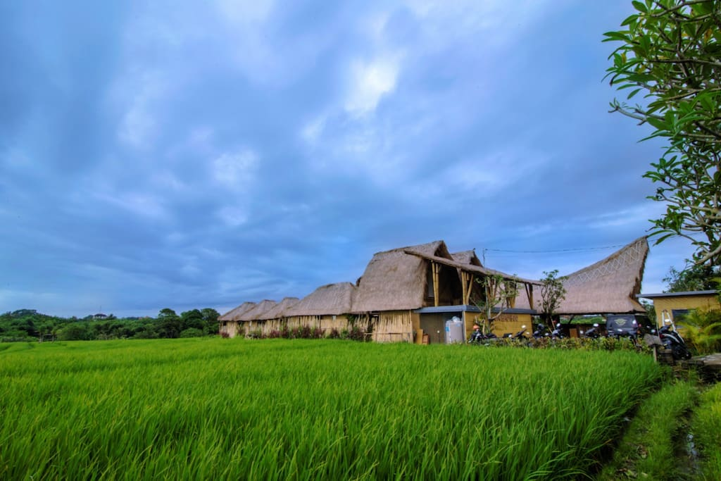 in the middle of rice field