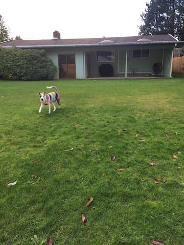6 foot fully-fenced spacious backyard!