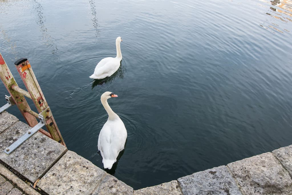 ''it was so idyllic to wake up to see the resident swans floating on the water''