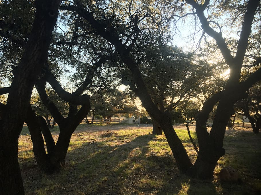 A stand of majestic Emory and White oak trees welcome you to Huachuca Cottage.