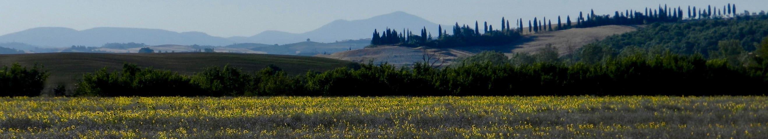 Guidebook for Monteroni D'Arbia