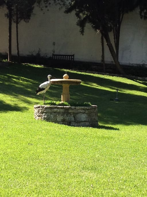 Stork drinking from the fountain