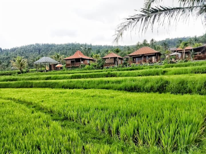 Munduk Villa with adorable ricefield view