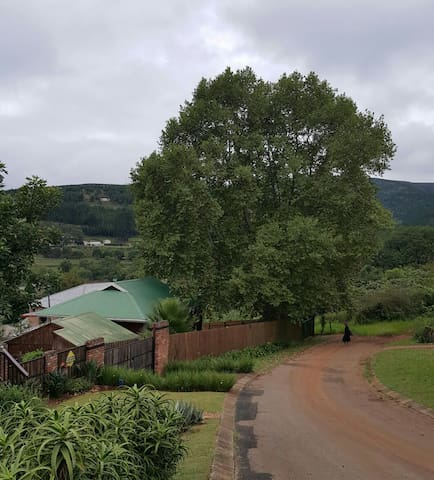 The Big tree - Sabie - House