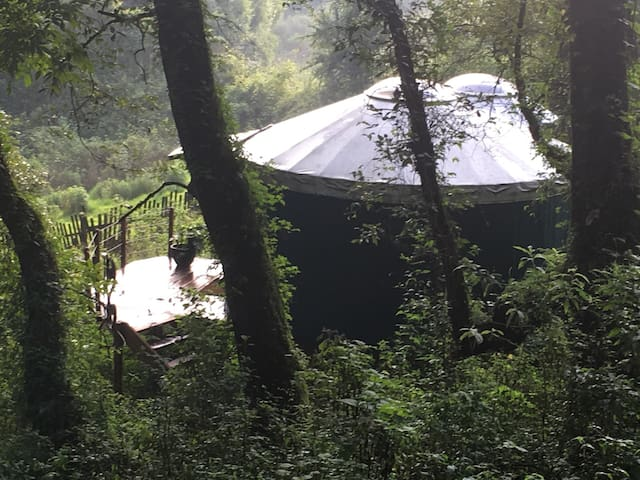 Sunny yurt in magical forest
