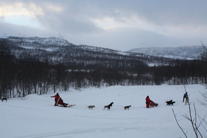 Dogsledding at Holtås/Kvernmoen. Contact me for booking. Cooperation Stall Holtaas and Green forest Husky.