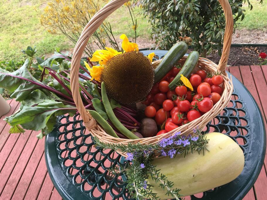 Garden Autumn harvest!