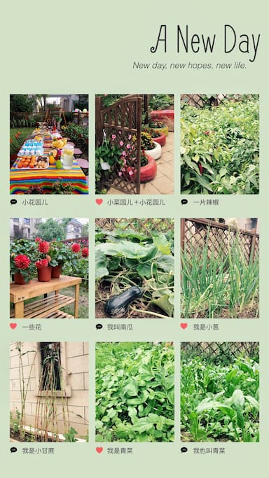 花园加菜园