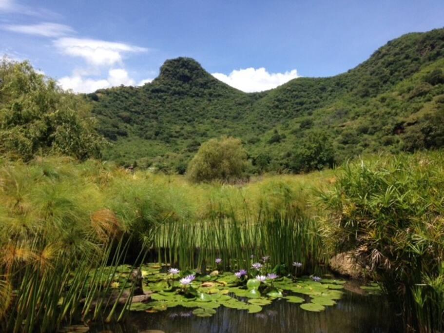 Hermosa Vista del cerro de la Asunción, emblema de Malinalco. La amplitud de las vistas de la propiedad es espectacular. Por esto nos enamoramos del lugar.