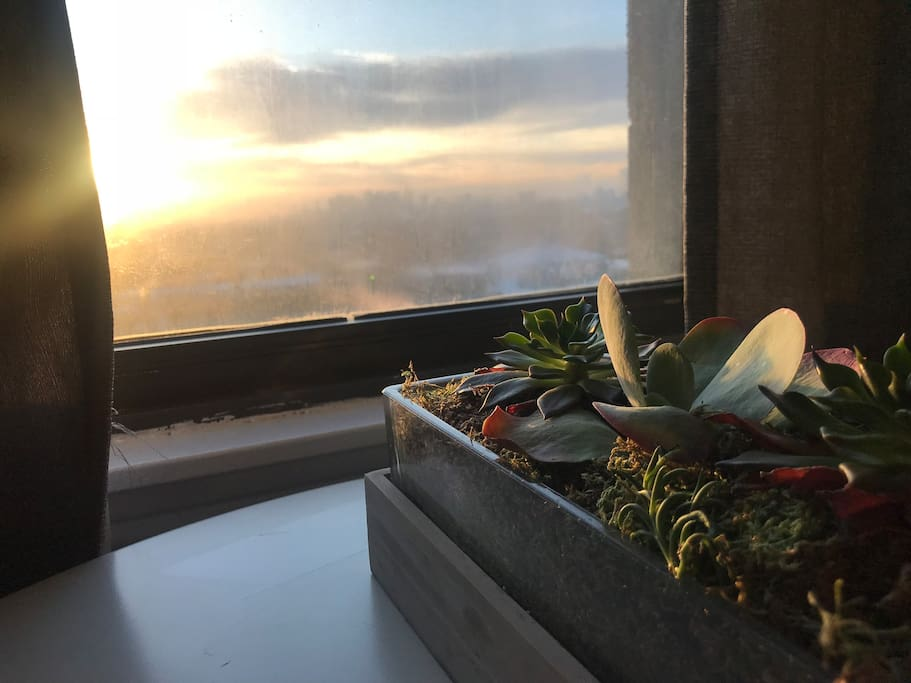 Succulents & Sunrise