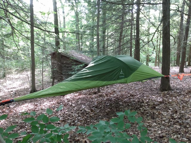 Tree Tent Campsites (Forest or Field)