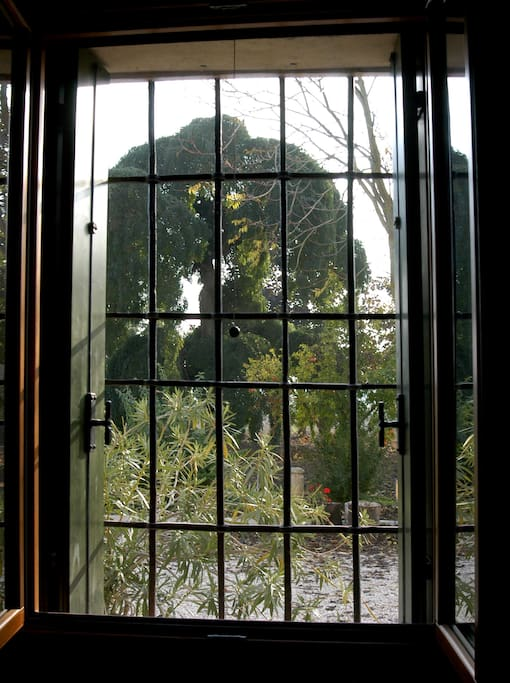 vista parco dominato dalla pluricentenaria sophora japonica