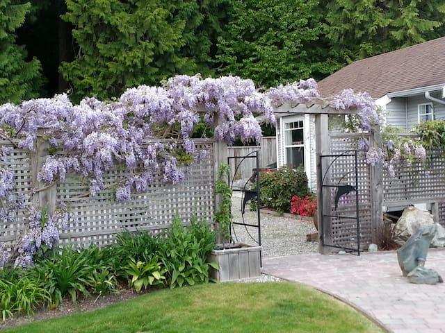 Parking area/lawn area lattice fence with Wisteria vines