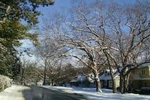 Hillcrest Dr  - pretty in winter.